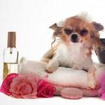 dog-cosmetics